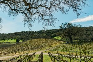 paso robles wine tours - hammersky winery