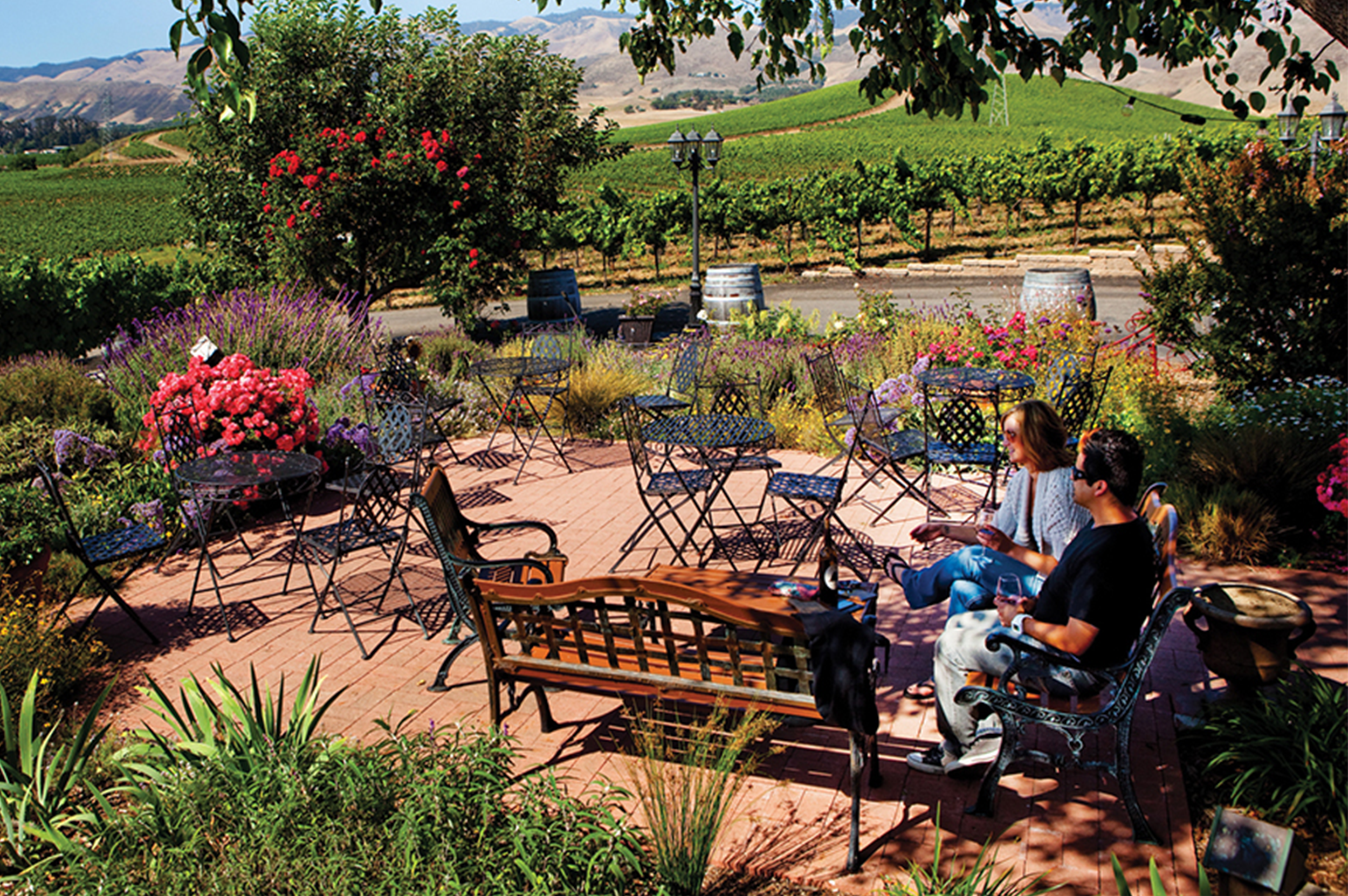 Wolff Vineyards: Featured Edna Valley Winery | SLO Safe Ride