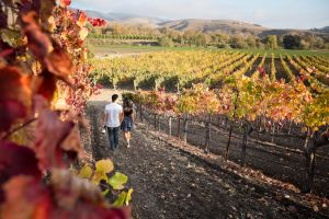 paso robles wine tours packages